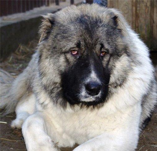 """Случай в ветеринарной клинике — как это бывает, когда у """"большого зверя"""" кончается терпение…"""