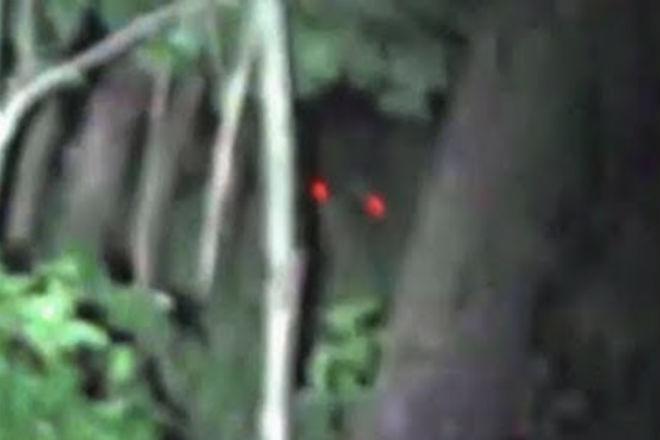 Австралийский охотник снял странное существо с красными глазами