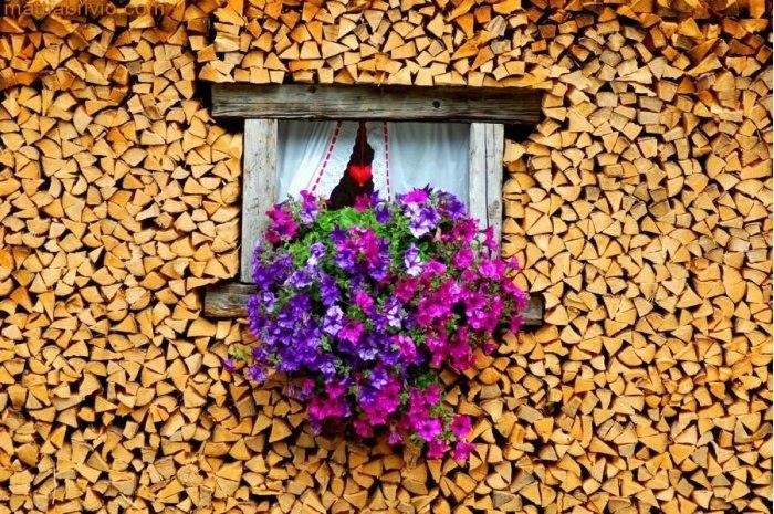 Как правильно хранить дрова?