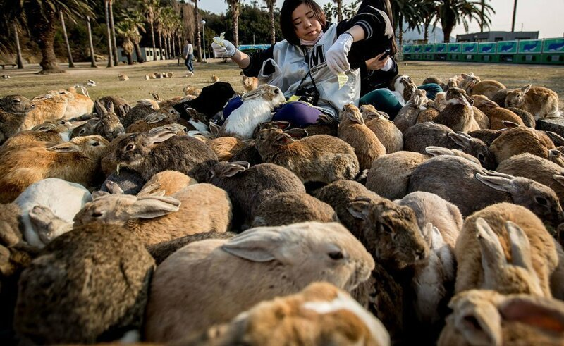 Остров Окуносима путешествия, факты, фото