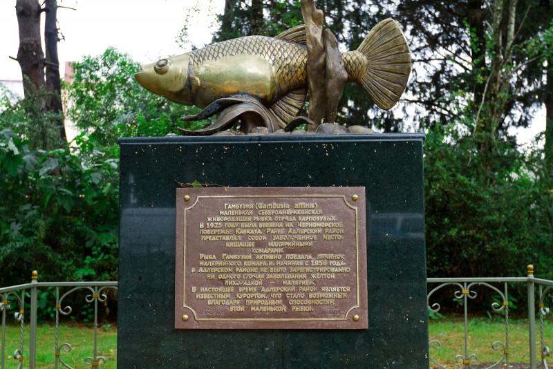 Гамбузия: как  маленькая рыбка спасла жителей города Сочи