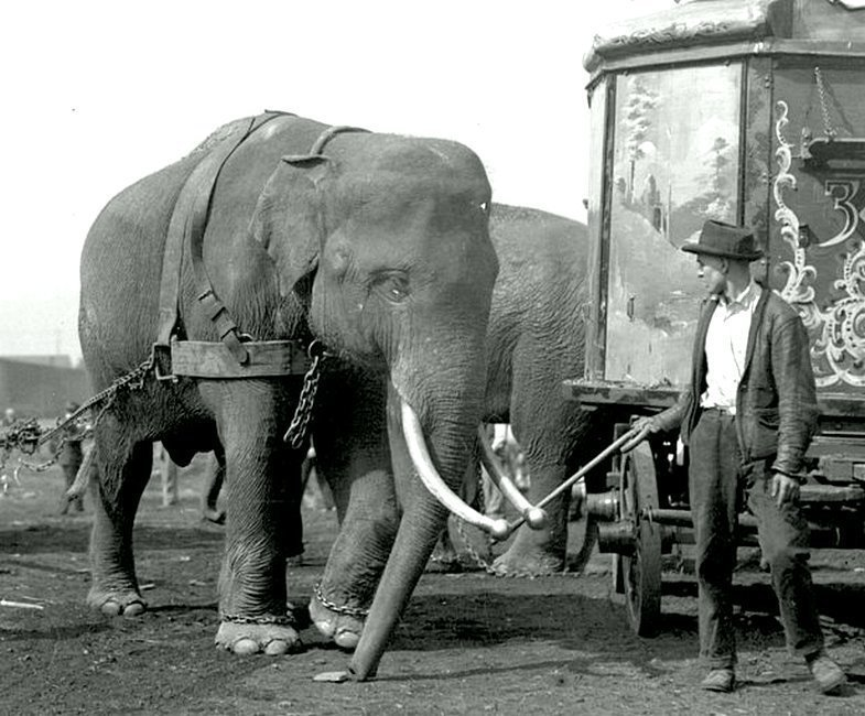 Цирк Sells-Floto приехал. 1922 год Весь Мир в объективе, ретро, старые фото