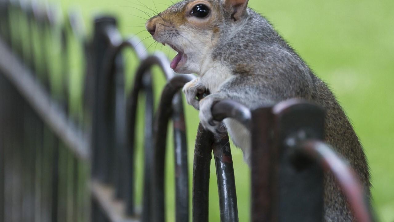 удивленные животные фото