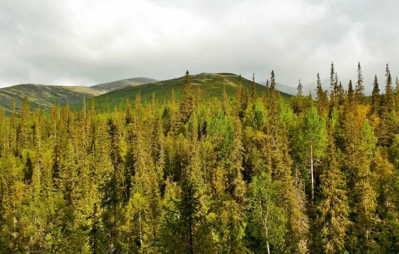 Россия намерена необычным способом задействовать тайгу, чтобы компенсировать выбросы CO2 Новости