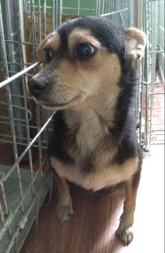 """""""Муля, не нервируй… себя!"""" Маленькая собачка пряталась в подвале от каждого шороха – и вот почему!"""