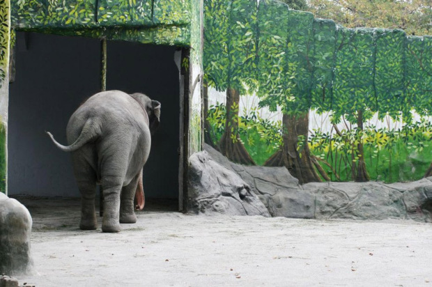 'Depressed' zoo elephant has lived alone for 35 years