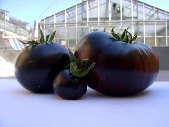Самые необычные фрукты и овощи на прилавках