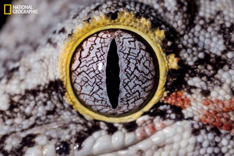Глаза животных крупным планом: немного странные, но очень красивые фото глаза,животные,интересное,крупным планом