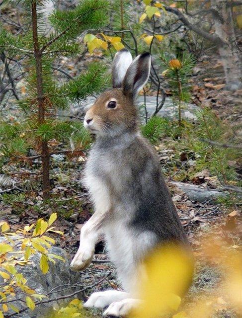 Охота на зайца от Ovodа