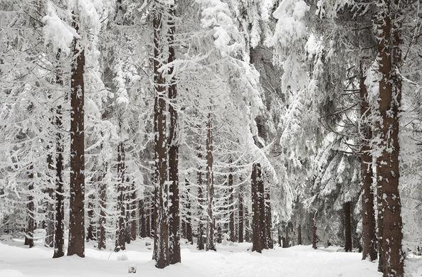 Пермский охотник десять часов шел на лыжах, чтобы спасти друга