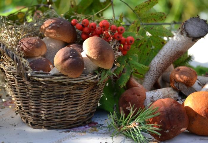 Лесные грибы / Фото: goodfon.ru
