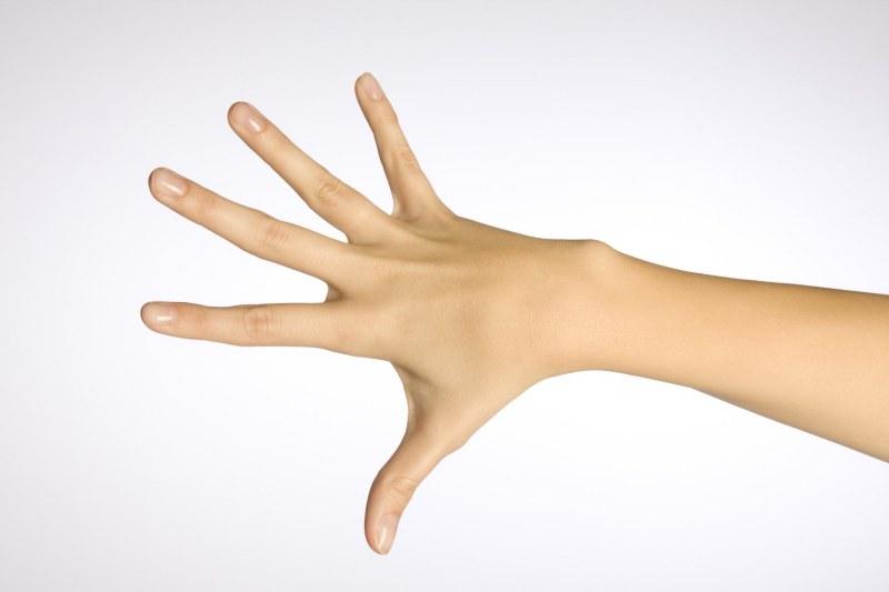 Как длина пальцев рук влияет…