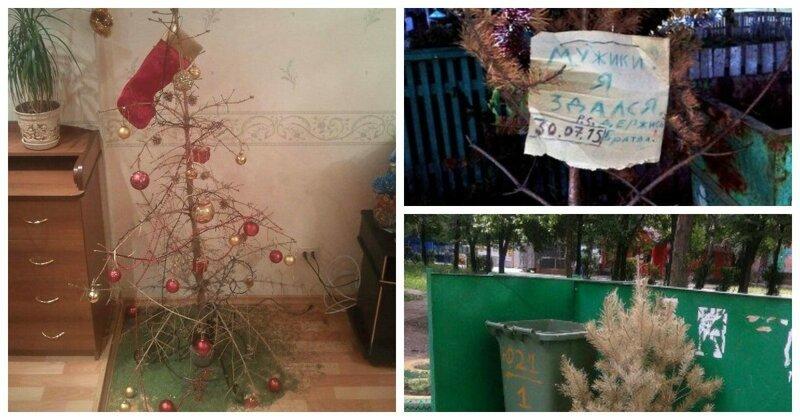 Впервые в России посчитали число тех, кто хранит свою елку до лета
