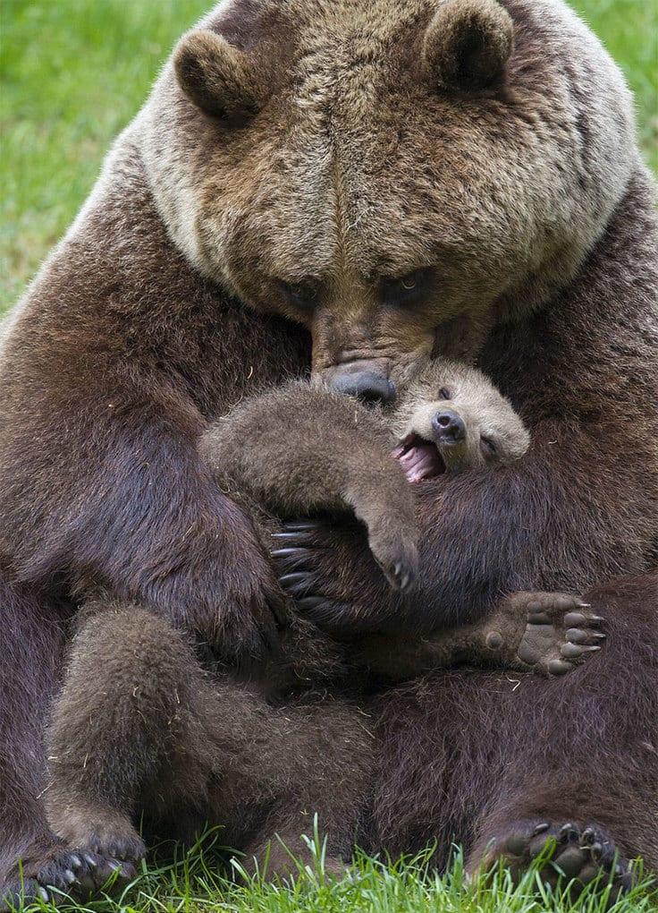 оба трогательные фото животных с детенышами вот именно
