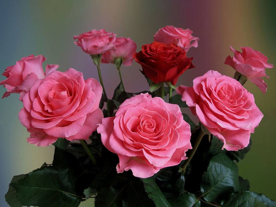 Плейкасты и открытки к дню роз