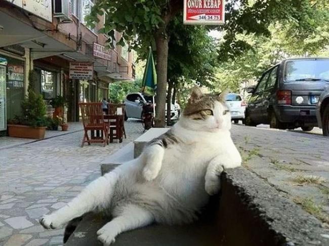 В Стамбуле установили скульптуру в память о самом ленивом в мире коте