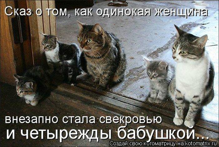 Уморительные истории о котах