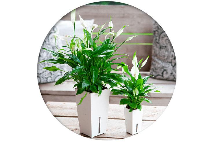 Какие цветы подходят для спальни, ванной, кухни, гостиной комнатные растения,полезные советы