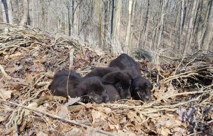 «5 маленьких испуганных лабрадоров жались друг к другу…» Спортсмены нашли крошек в лесу — и не смогли пройти мимо