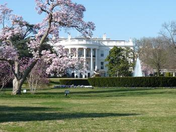 Вооруженная женщина пыталась проникнуть в Белый дом