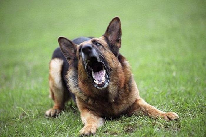 Почему собака лает на одного человека, а другого не трогает домашние животные,наши любимцы