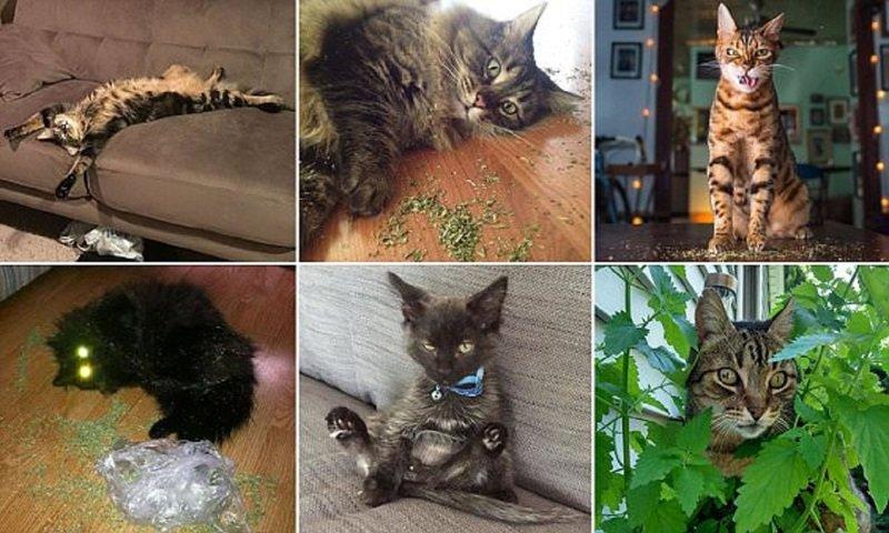 Этим котам валерьянки больше не наливать