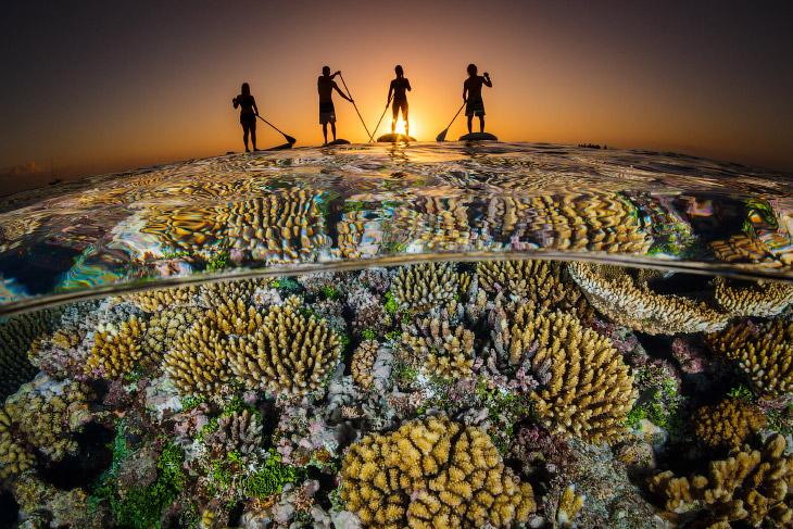 Конкурс подводной фотографии Ocean Art 2018