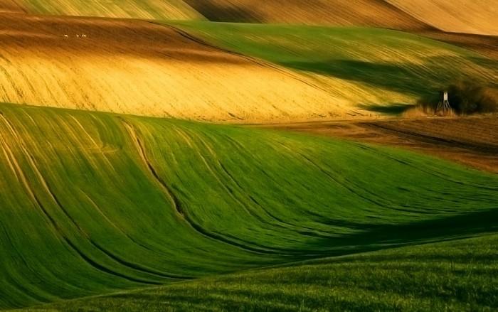 Удивительные европейские поля