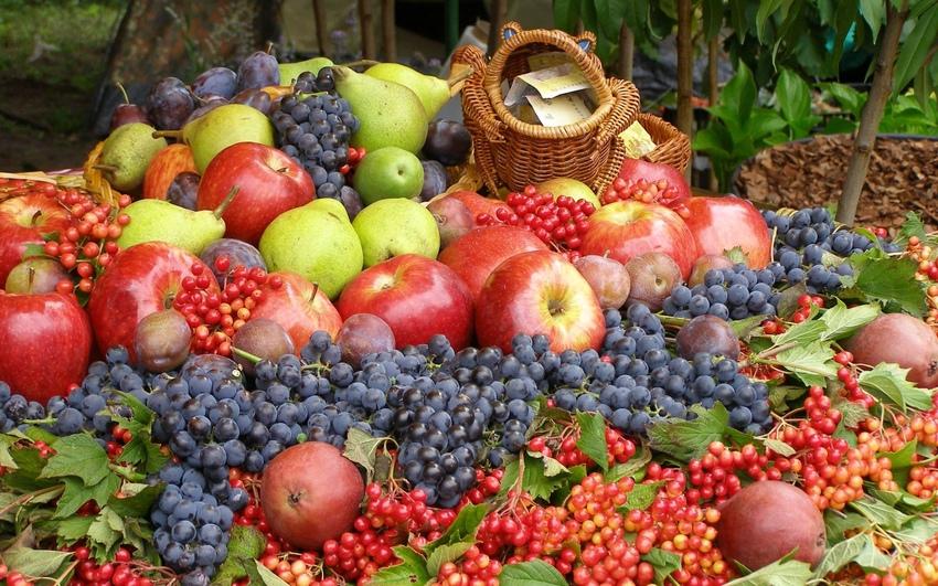 Самые урожайные сорта плодовых деревьев и ягодных кустарников