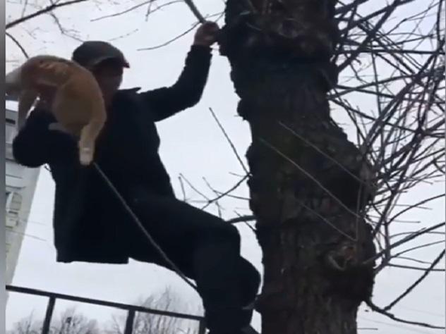 Видео со спасением котенка в…
