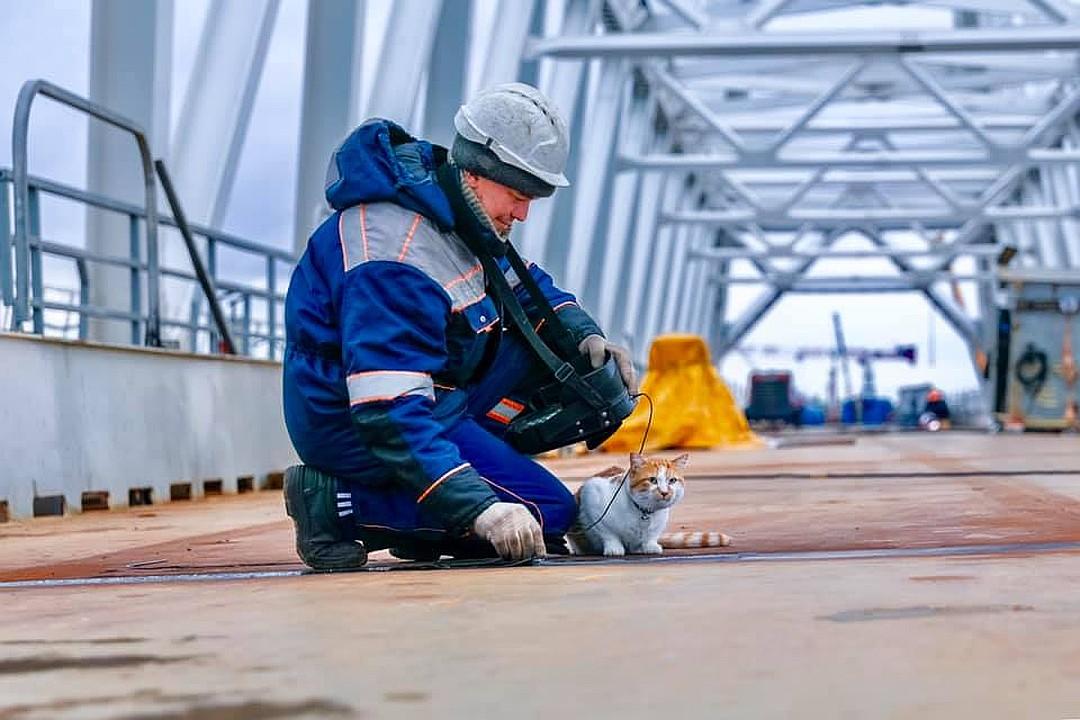 Кот контролирует каждый сантиметр стройки века. Фото: Кот Моста/VK