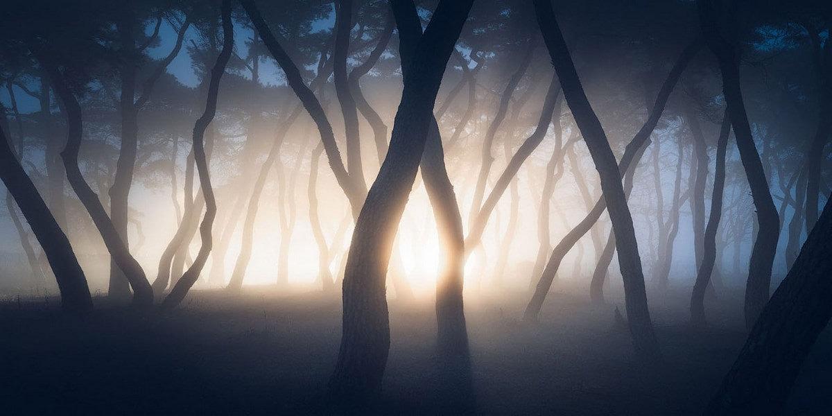 Туман на рассвете в роще. Боэн, Южная Корея