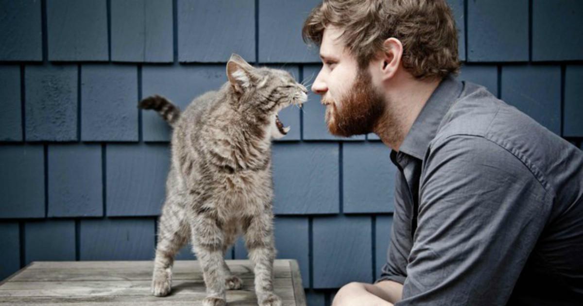 Все кошатники ЭТО делают! Если у вас есть котик — читайте и узнавайте себя! :)