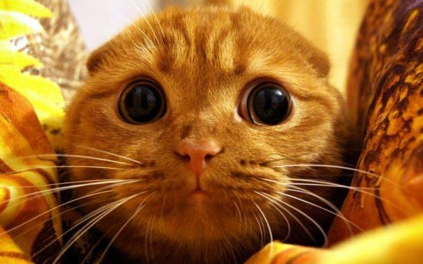 Как научить котенка любить пылесос