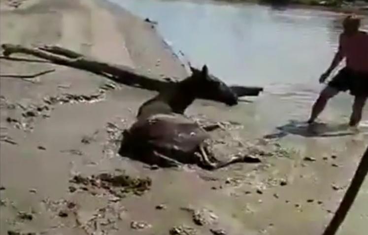 Тюменские рыбаки спасли лошадь