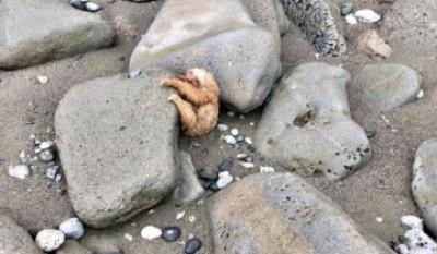 Прилив принес на дикий пляж……