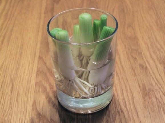 8 овощей, которые ты сможешь…
