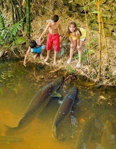 Вот это рыбки!...