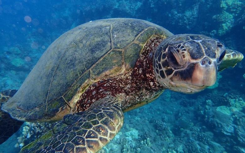 Ученые выяснили, почему морские черепахи глотают пластик