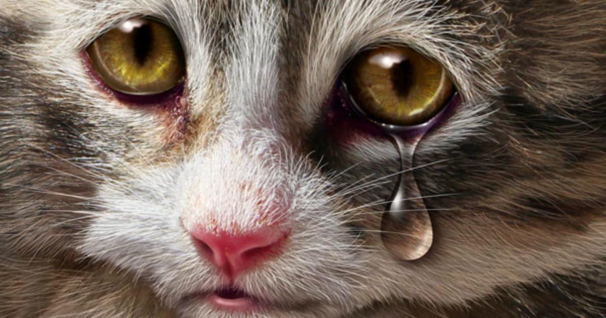 Открытки с плачущими животными