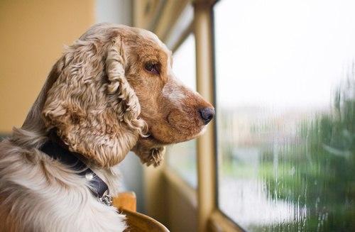 Фраза «Я Ненадолго» ничего не значит для собаки...