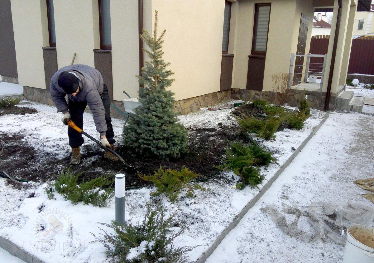 Какие растения можно посадить зимой