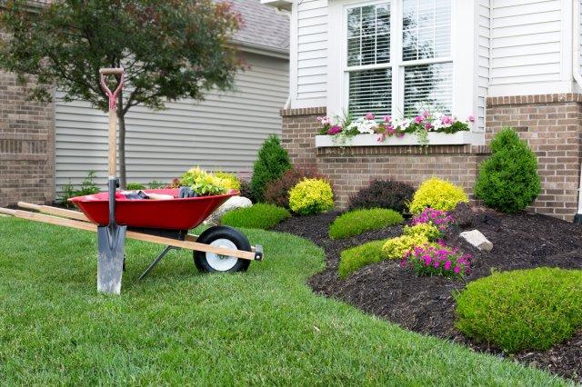САД, ЦВЕТНИК И ОГОРОД. Как обновить садовые многолетники весной