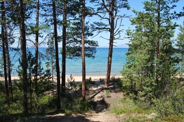 Правительство предлагает разрешить вырубку леса на Байкале