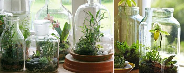 Варианты для домашнего цветника | Роскошь и уют Фото