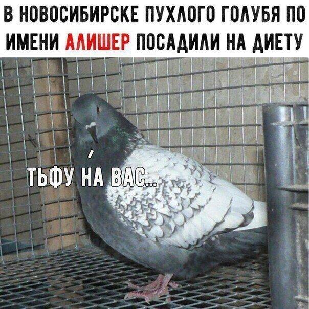 Картинки прикольные про голубей с надписью, анимация спасибо все