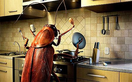 Как избавиться от тараканов: на удивление простой и надёжный способ