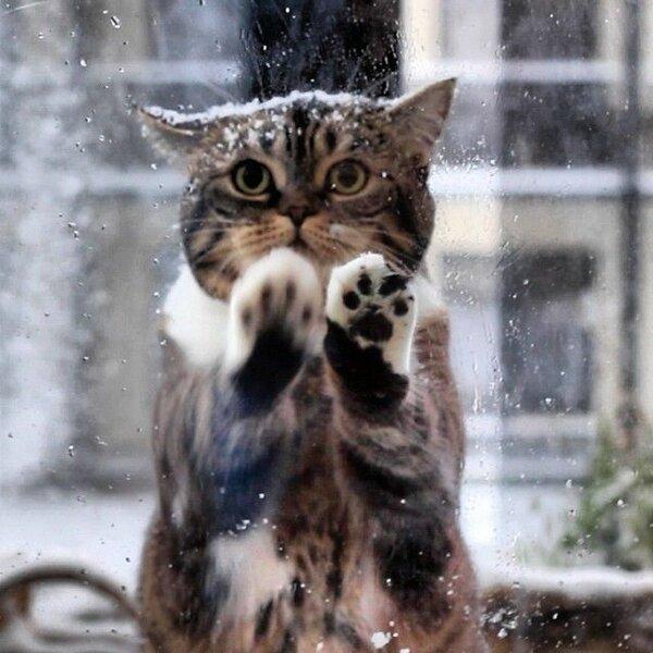 Кошка пришла к людям просить…