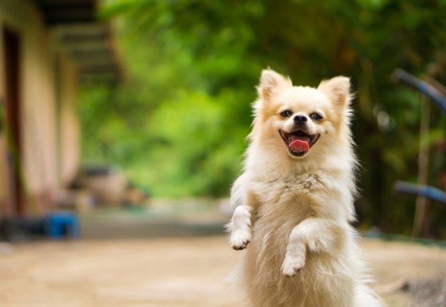 Собака радуется встрече с хозяином