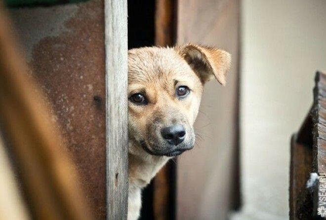 Фотографии беспородных собак на улице